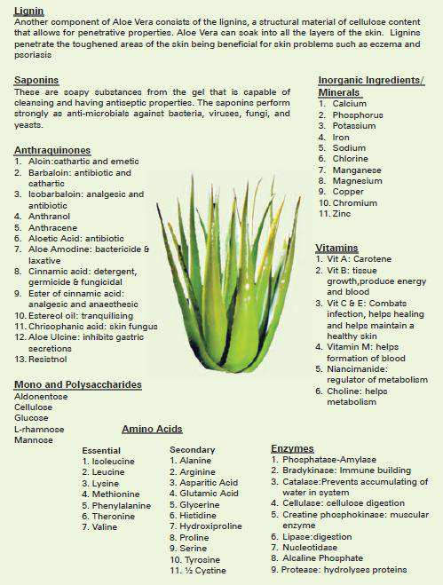Aloe-Vera-gel-main-chemical-constituents.png