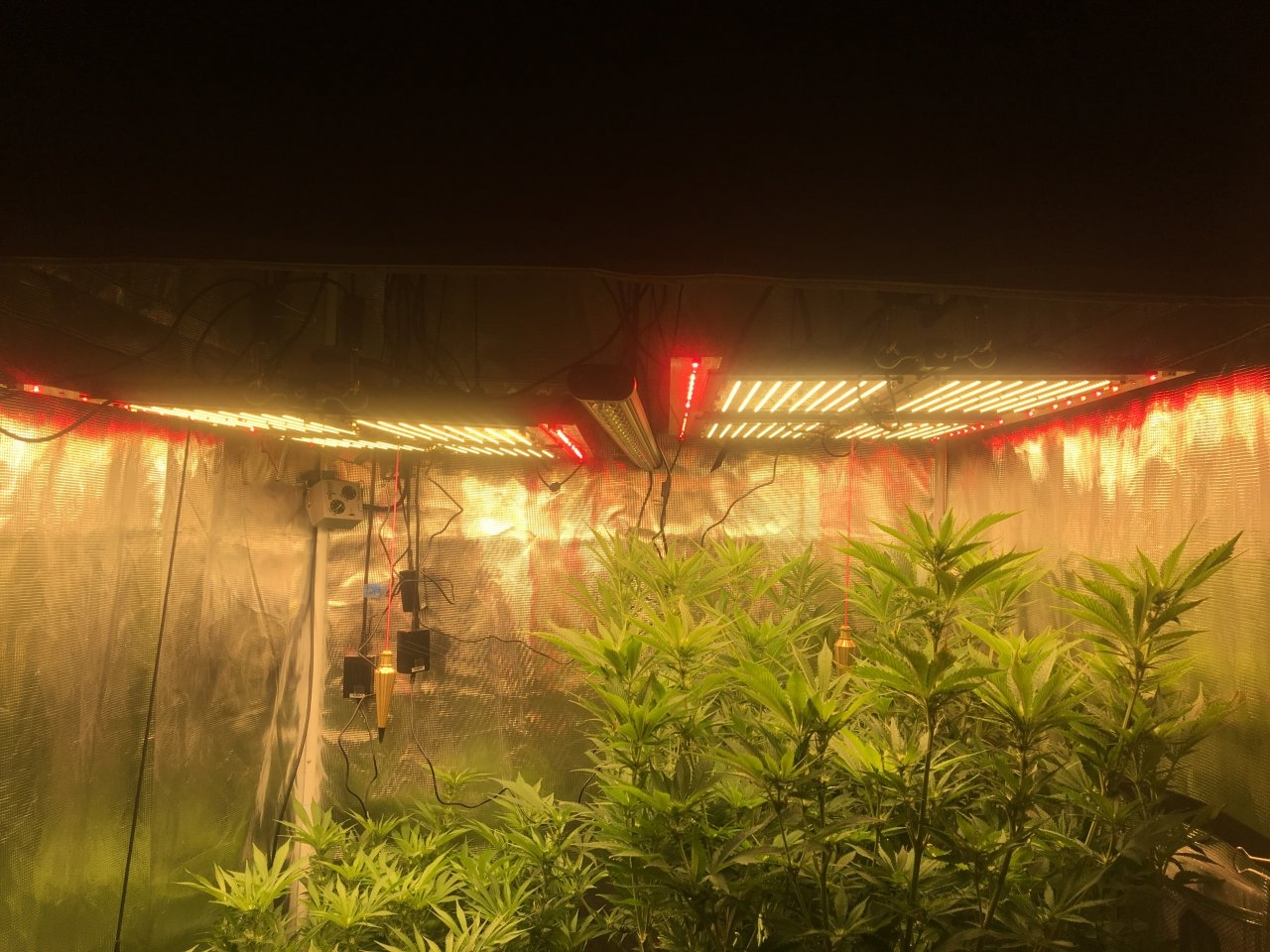 Timber Grow Lights Powered By Samsung | Page 2 | 420 Magazine ®