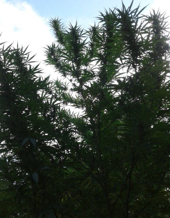 Bud branches against an evening sky_e001.jpg