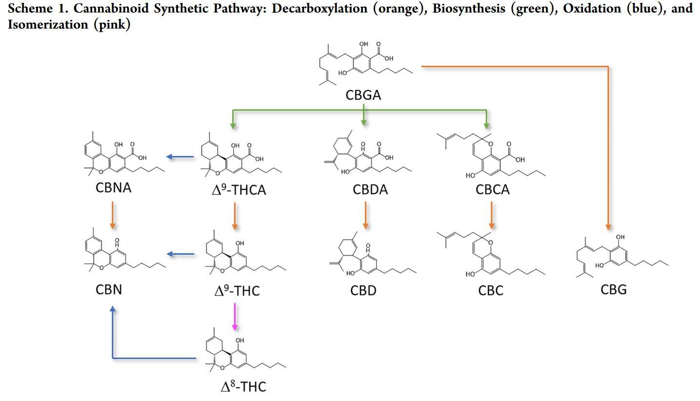 Cannabinoid Decarboxylation A Comparative Kinetic Study pdf.jpg