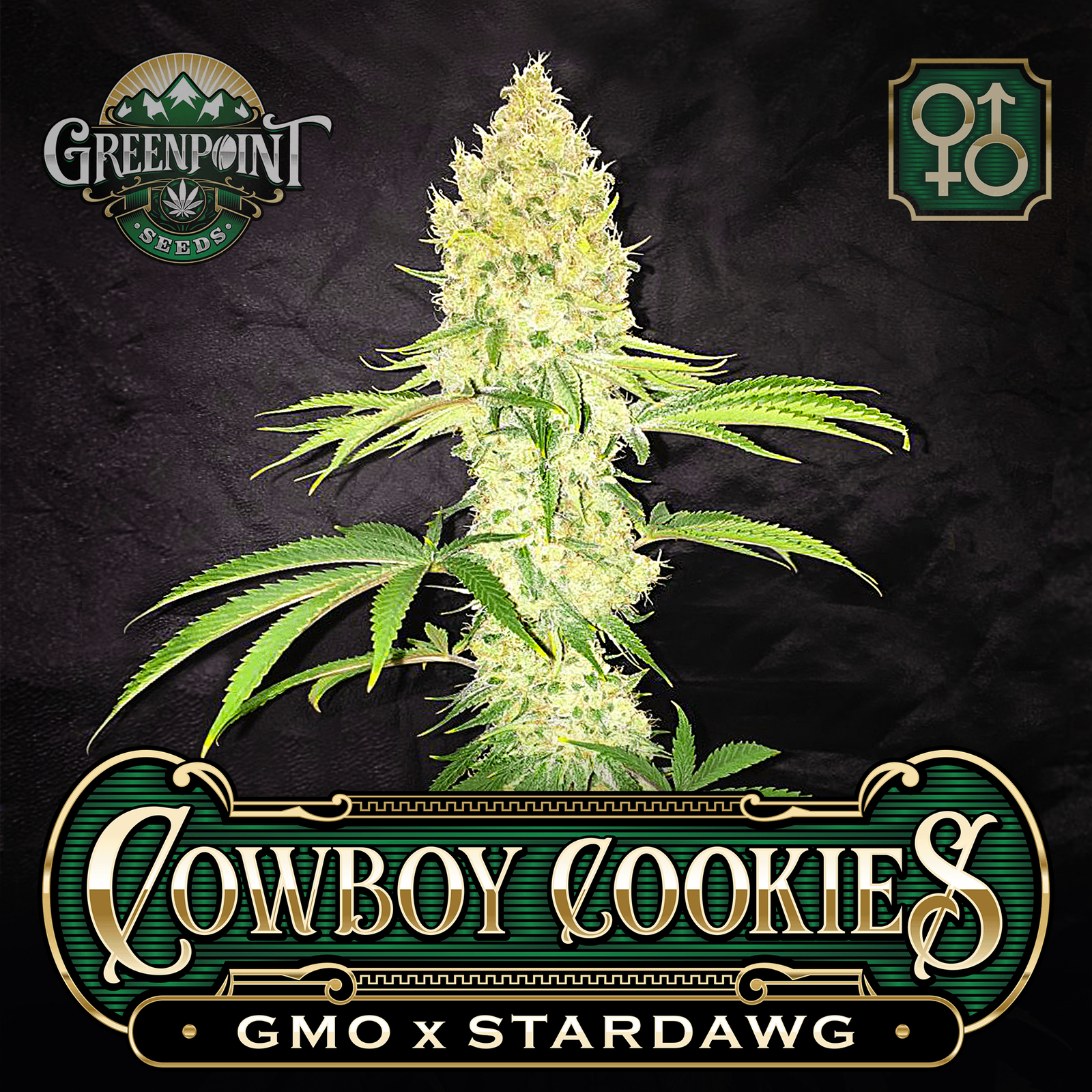 cowboy-cookies-gmo-stardawg-greenpoint-seeds_1b-c.png