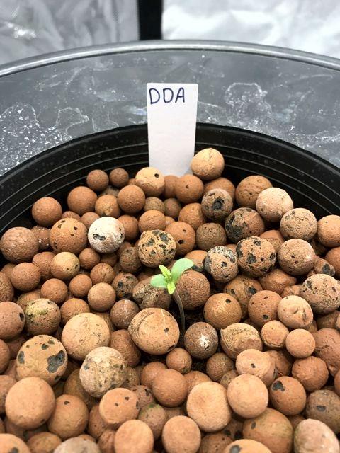 DDA - Bucket 1.jpg