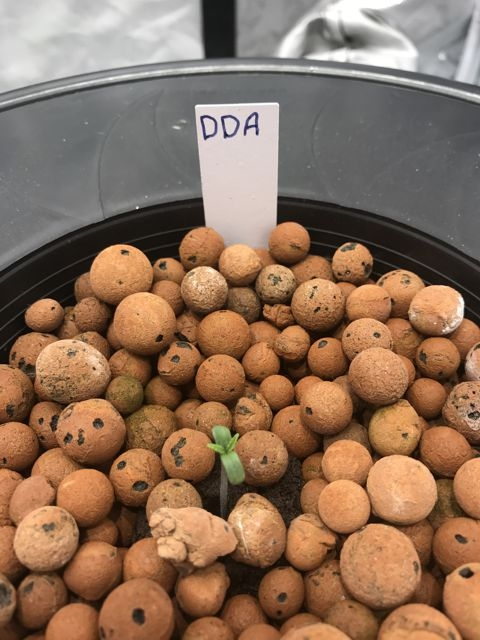 DDA - Bucket 2.jpg