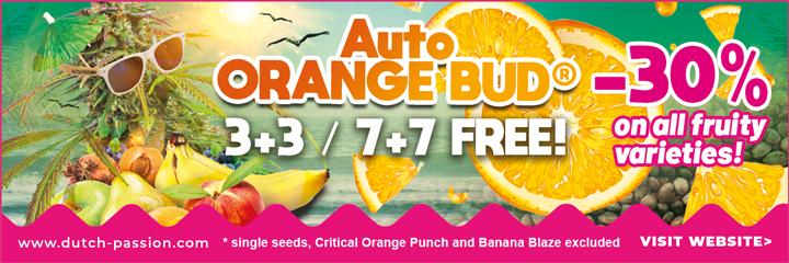 dutch-passion-seeds-summer-fruit-festival-2021.jpg