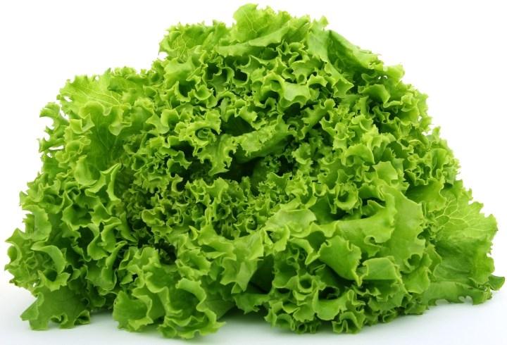 green-leaf-lettuce2.jpg