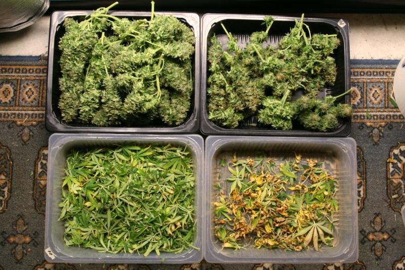 Harvest_24_07_2020_1.JPG