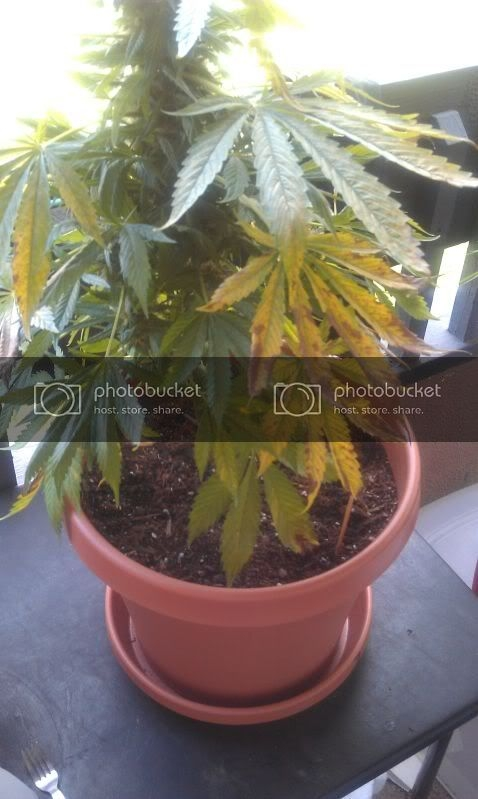 IMG_20120929_095753.jpg