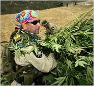 marijuana3_190.jpg