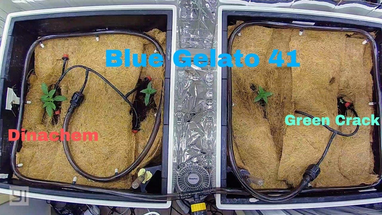 PicsArt_11-04-11.22.17.jpg