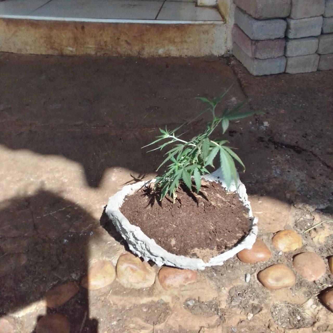 Plant looking forlorn.jpg