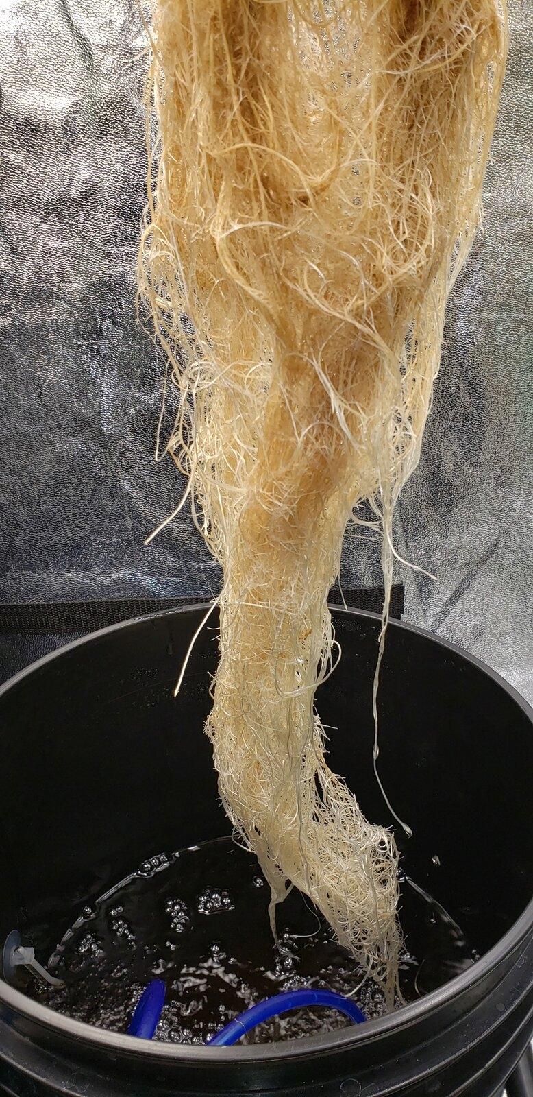 roots 1.jpeg
