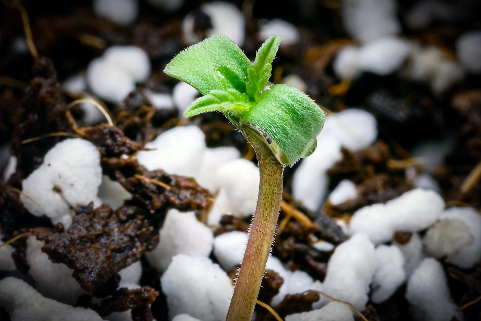 seedling 04292021-1.jpg
