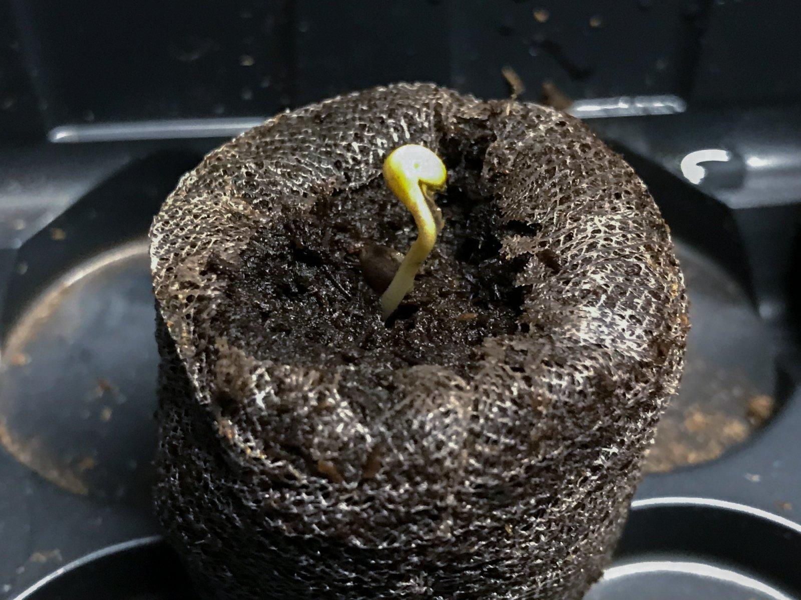 seedling 04292021-6.jpg