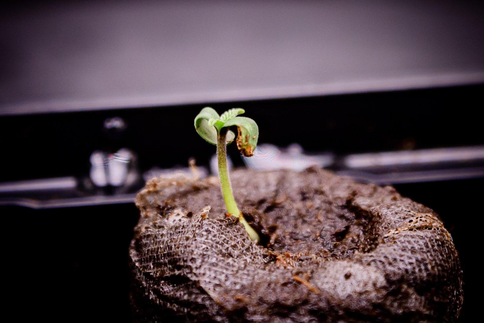 seedling-2.jpg