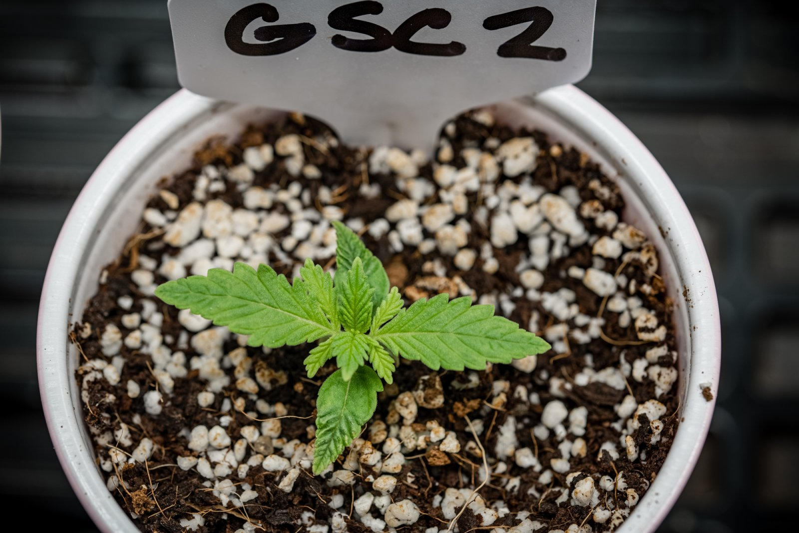 Seedling update 05062021-2.jpg
