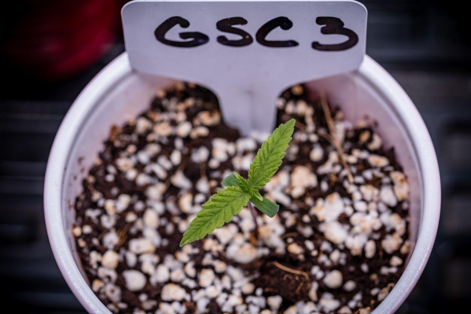 Seedling update 05062021-3.jpg