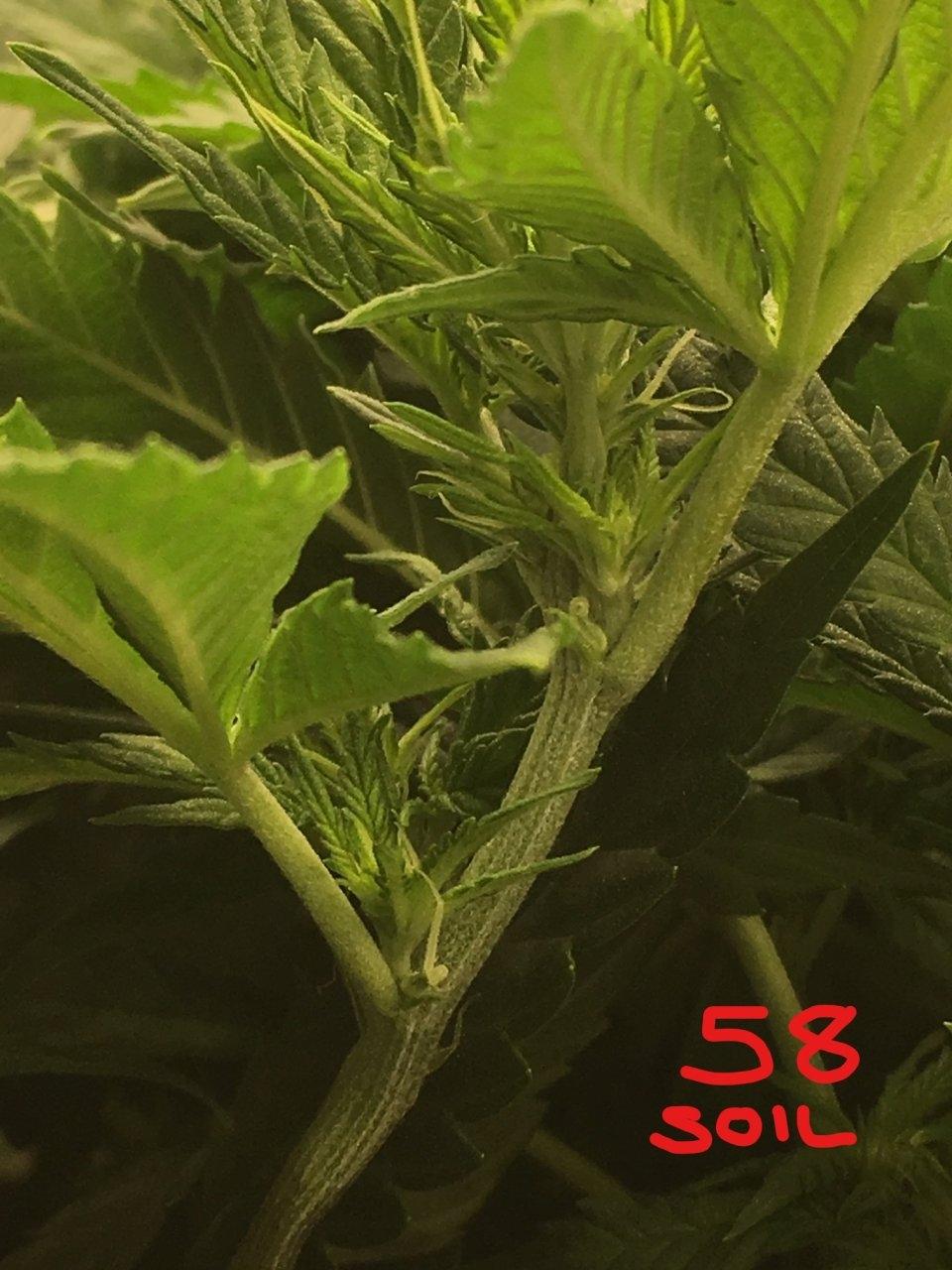 soil 1_LI.jpg