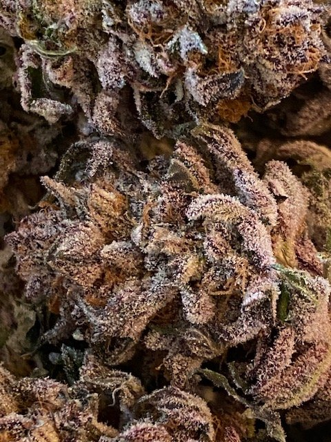 Tropical Punch trimmed and ready to be an appetizer.jpg
