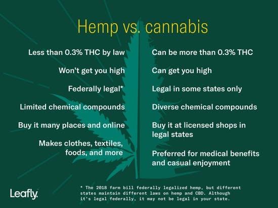 V5_Hemp-vs.-cannabis-Inline-1800-x-1350-Option-1-1024x768.jpg