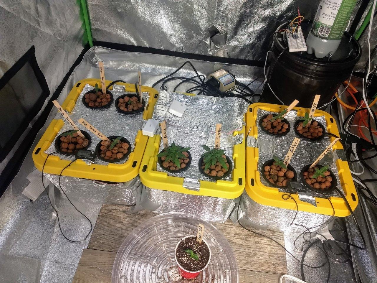 week2plants.jpg