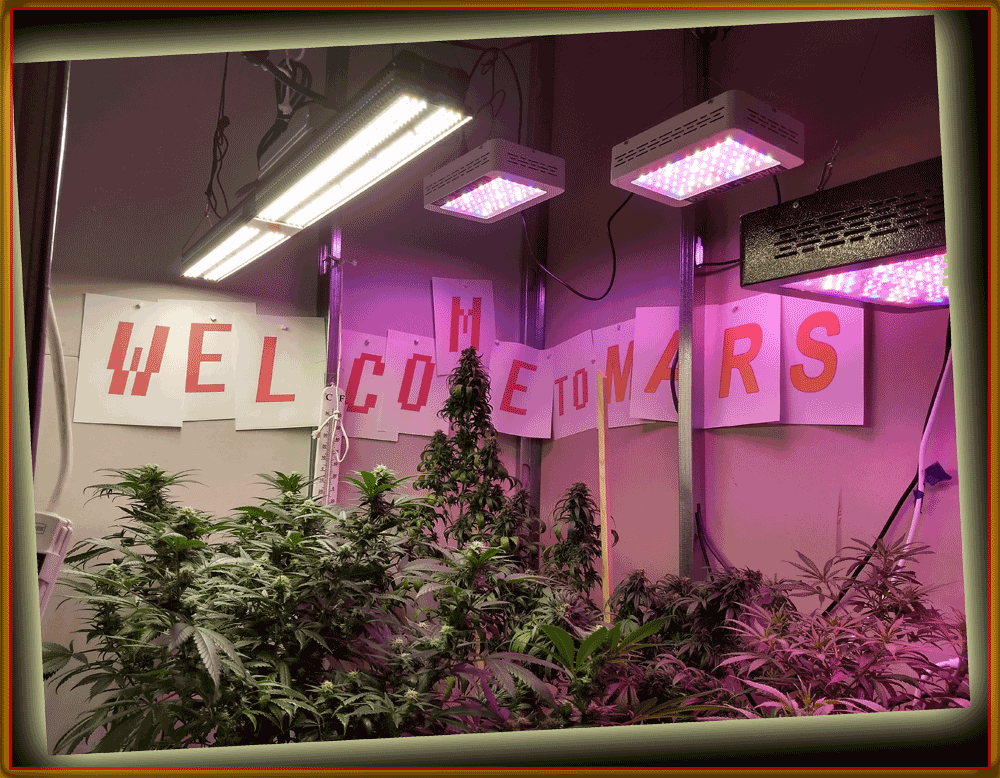 welcome-to-mars.png