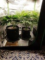 Day 41 Plants side.jpg