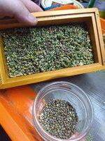 seeds 1.jpg
