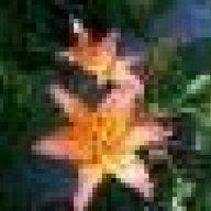 wildflowerbudd
