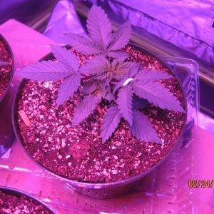 Day25feb24 Day 2 week 2 veg (4).JPG