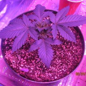 Day25feb24 Day 2 week 2 veg (5).JPG