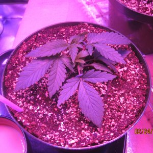 Day25feb24 Day 2 week 2 veg (6).JPG