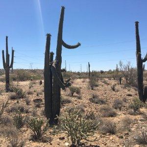 Desert joy