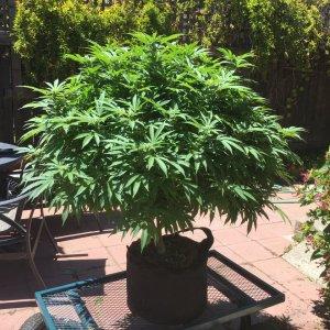 I call her Florabunda