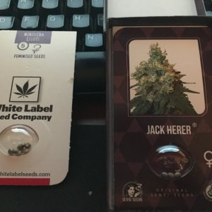 Jack Herer and Northern Lights.jpg