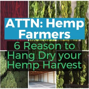 ATTENTION HEMP FARMERS: 6 Reasons to HANG DRY your hemp harvest this year