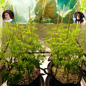 Dagobah Frost Forest - Group Photo