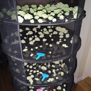 4/12 plants drying