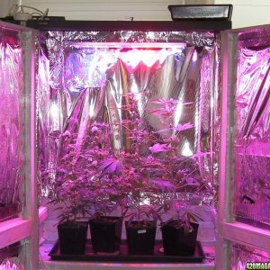 Haight Solid State LED Grow Lights