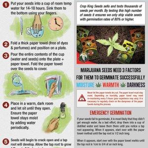 Crop King Seeds Germination Guide
