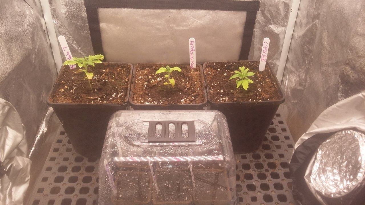Mars Hydro Led Grow Light Discussion Page 2091 420