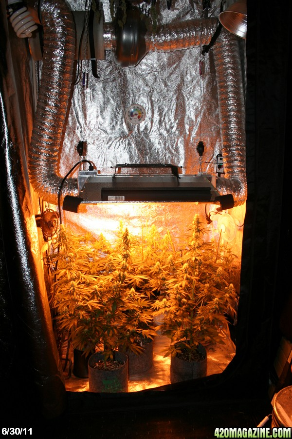 600w hps, 3x4x7.5 tent, light mover