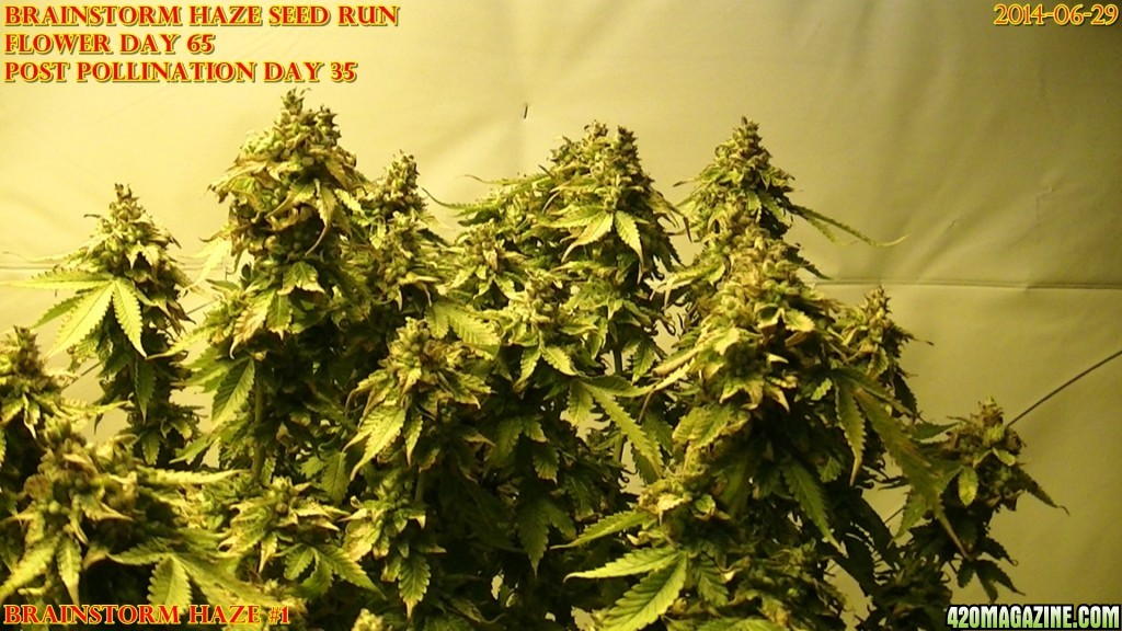 Brainstorm Haze seed run 2014-06-29