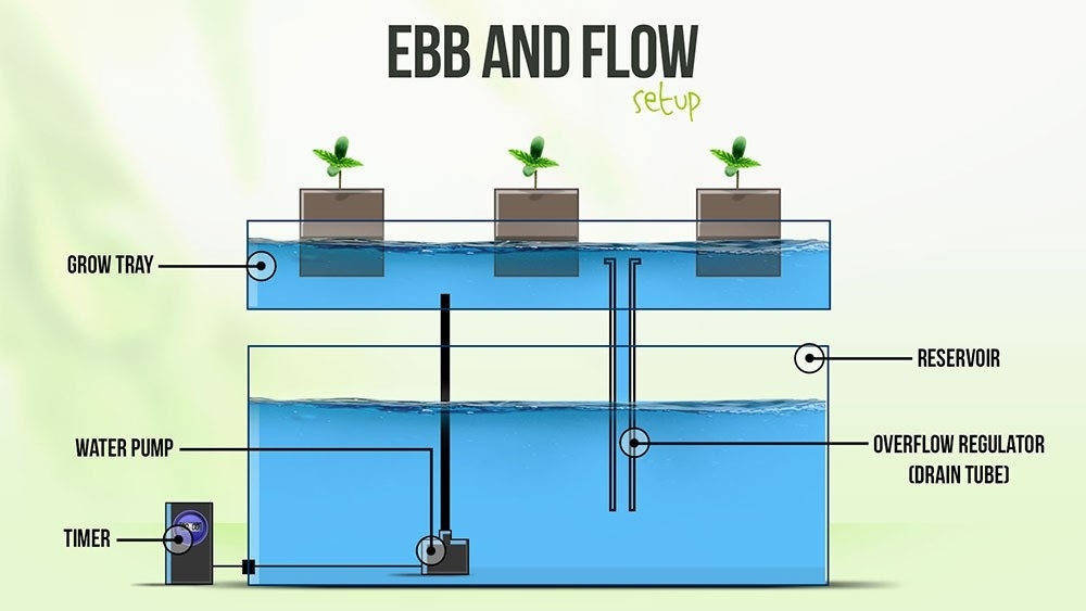 Ebb&Flow Setup.jpeg
