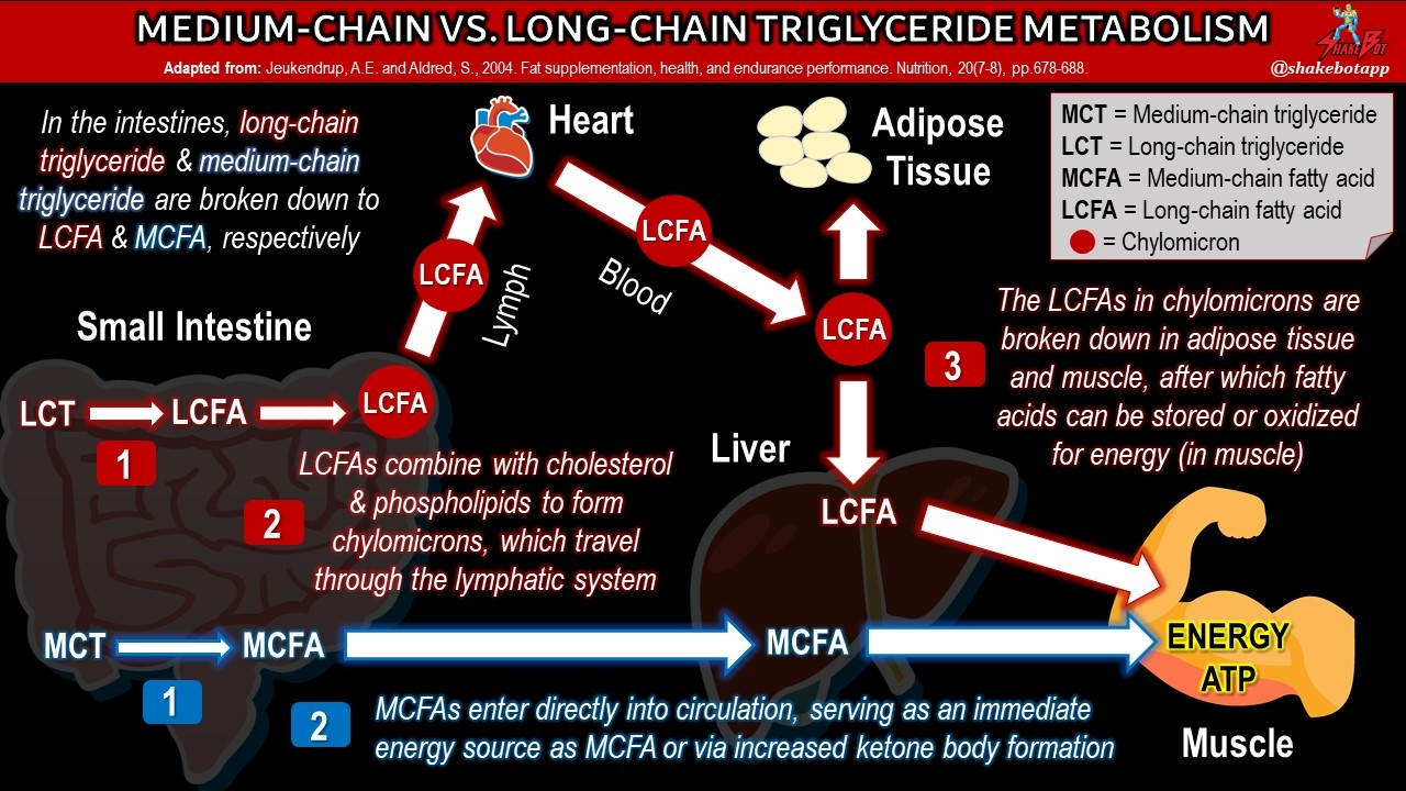 Long-chain vs Medium-chain triglycerides
