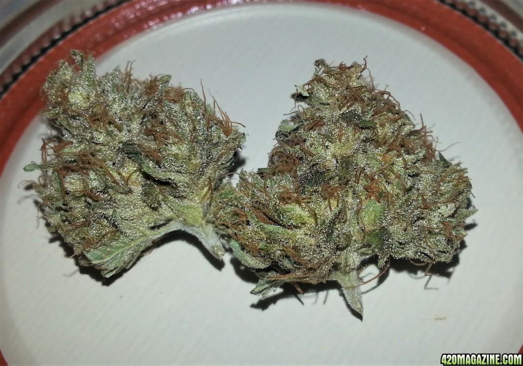 Myco-tek Seeds - Gorilla Dawg   420 Magazine ®