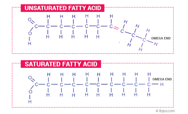Structure of saturated and unsaturated fatty acids
