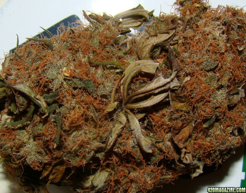 420 Magazine's Nug of the Month Contest: October 2008 | 420