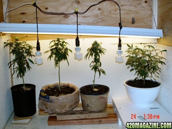 Elfy s bagseed grow. Aerogarden Weed Harvest. Home Design Ideas