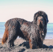 Sand_Newfie.png