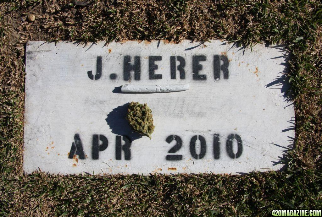 Jack-Herer-Gravesite-Plaque-4-15-2011.JPG